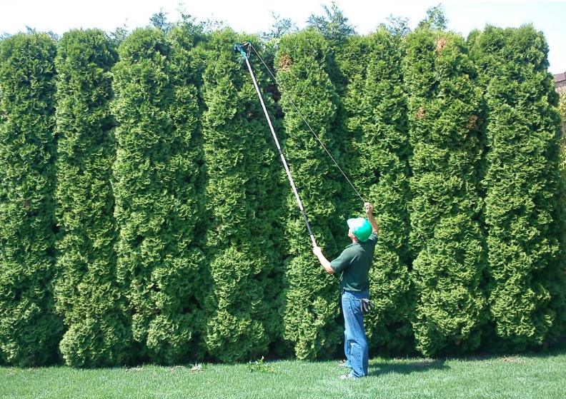Miért szükséges a növényeket évközben is formázni?
